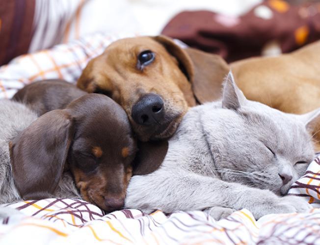 Die Schonsten Namen Fur Haustiere